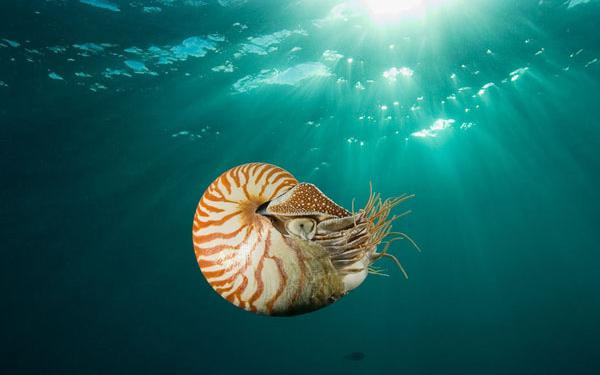 SciLogs-Nautilus-header_cropped