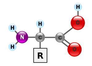 26f00baadd_acide-amine_DR_02